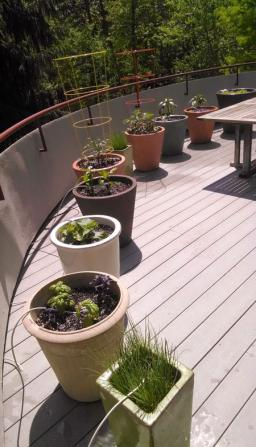Potted plants with drip line installation in Wautaga, TX